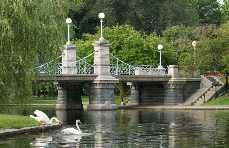 A lovely photo of Boston's Public Garden, with two swans sliding into a calm lagoon and a 140-year-old iron footbridge in the background.